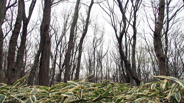 いわゆる武蔵野ってどこなのか。東京の西部と埼玉の南部あたりに漂う目に見える「武蔵野」を探しました。トンネルを超えた瞬間の武蔵野感ったらすごい。(安藤)