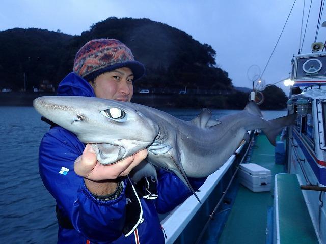 かなり僕好みのルックス。普通の釣り人はこの手のサメが釣れるとガッカリするらしいが、個人的にはとても嬉しい。