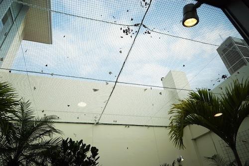 蝶を飼育しているスペースがあって目を見張った。