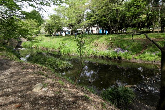 そこは公園だった。護岸もなくなり、いよいよ源流っぽい感じに