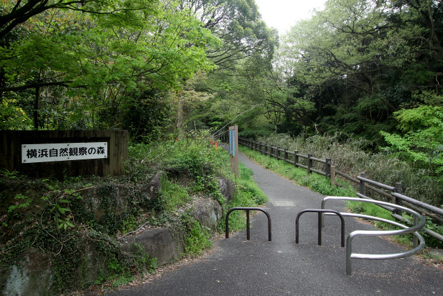 「横浜自然観察の森」という公園にたどり着いた