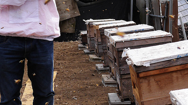 実はミツバチだらけ!(黄色い点は全部ミツバチです!)