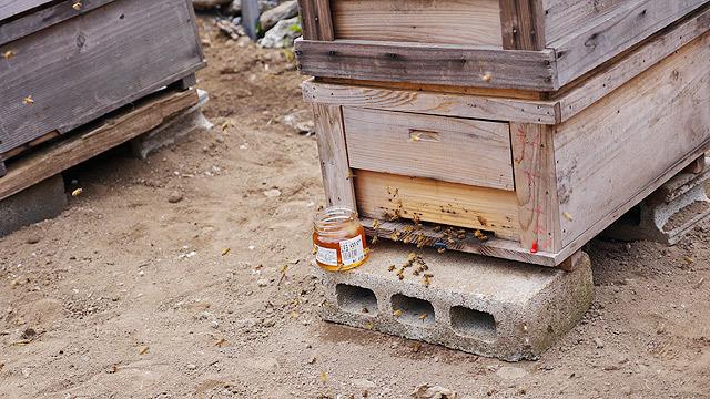 ハチミツをプレゼントします!