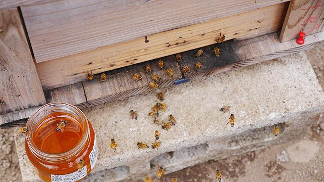 蜜に群がる蜂!