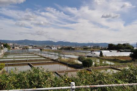 大和郡山の景色。一帯金魚池。しかも全部に溢れんほど入ってた。