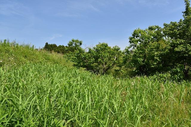 新緑の農道を5分ほど歩く