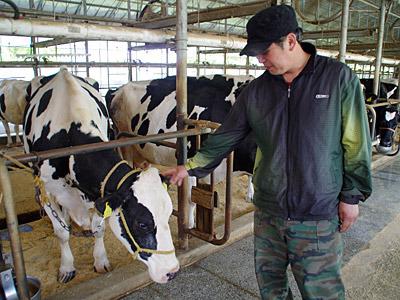 搾乳作業は365日、朝晩毎日だそうです。たいへーん。