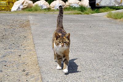 凄い怖い顔で猫がやってきた。縄張りに入ってすみません。