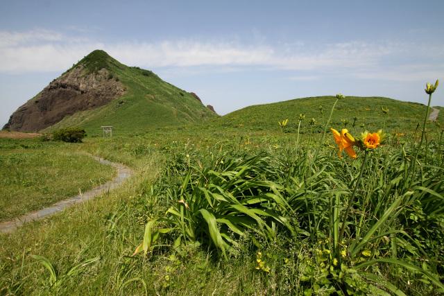 佐渡島北端に位置する大野亀。ちょうどカンゾウという花のシーズンであった