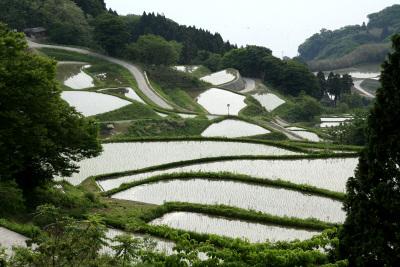 佐渡島東部、岩首という集落には棚田もあるよ