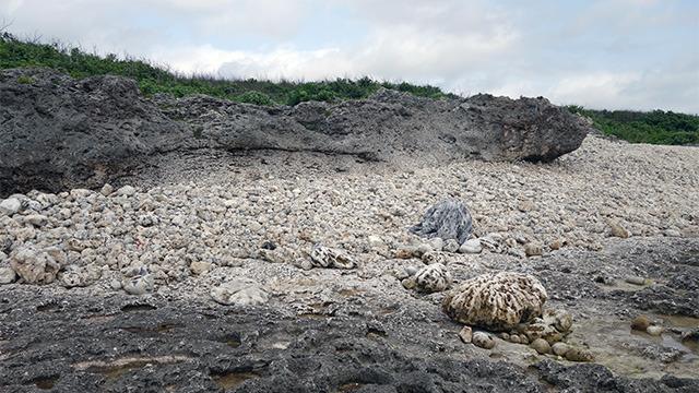かなりいけてる。石だ。石垣島で石になった。