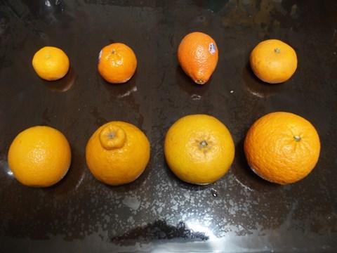 大きさや形も様々な柑橘類たち。