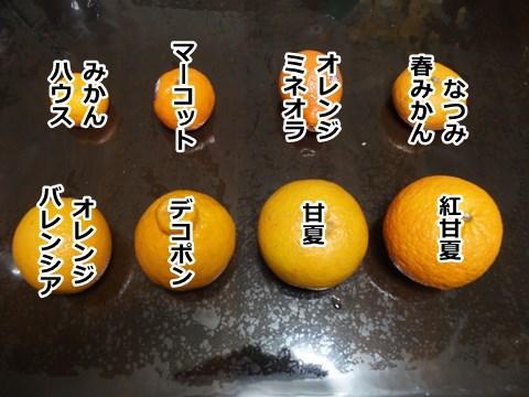 私としては、オレンジはみかんに含まれると思っています。