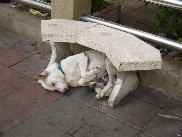 関係ないけど、綺麗に四本足を折り畳み遠慮がちに眠る犬がいた。
