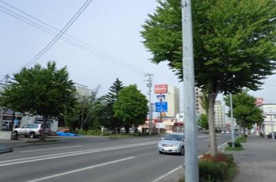 本州だといかにもセミが付いていそうな街路樹には一匹も見当たらないが…。