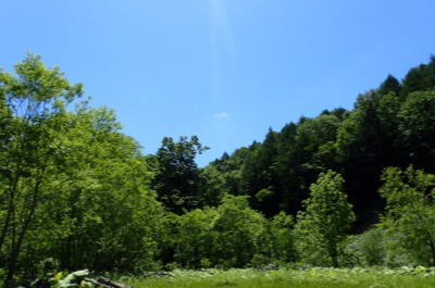 ちょっと本気出してる感じの森へ行くと、確かにセミの合唱が響いている。
