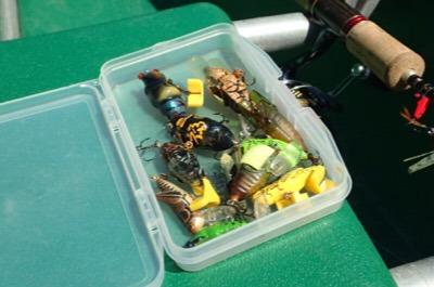 釣具箱の中にはセミルアーがたくさん。よく見るとバッタ型のものもある。