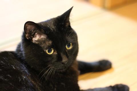 写りにくい黒猫の毛並みもこんなに鮮やかに!!
