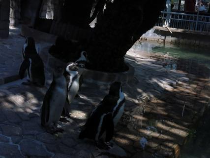 フンボルトペンギンからのスタート。あらら、いつもと変わらない。
