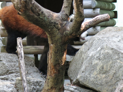 動き回る動物はまだまだ難しい。