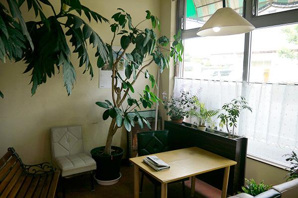 葉が生い茂る喫茶スペース。ここでお茶をしたい
