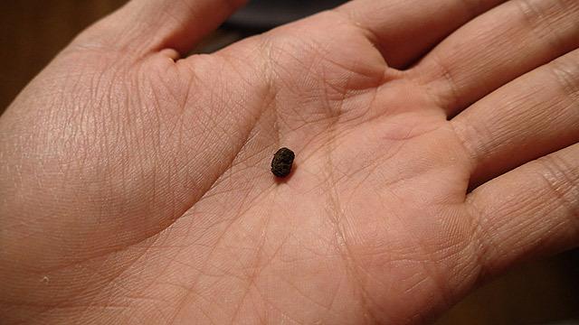 これは蚕の糞