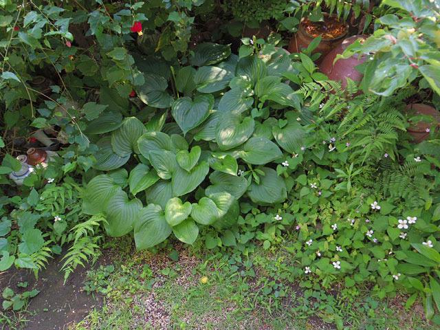 うっそうとして好きな実家の庭。蚊が多い