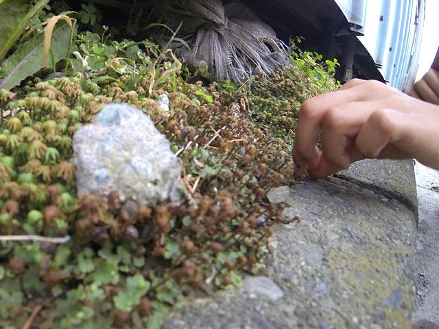 ダンゴムシに伸びる小さな手