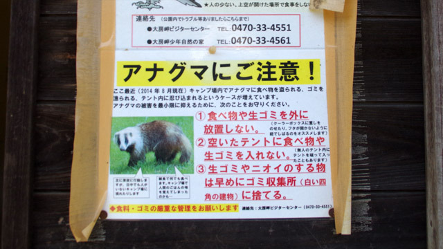 アナグマという動物が日本にいることすら知りませんでした。