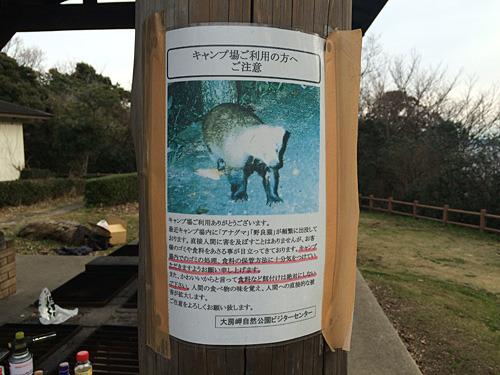 このポスターを見てやってきました。タヌキかと思ったらまさかのアナグマ!