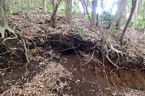 現在は使われていないらしい巣穴の場所も教えていただいた。アナグマは何世代にも渡って拡張しながら住むそうです。