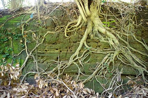 断層に空いた無数の穴。アナグマの巣穴にしては小さい。