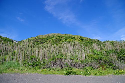 海岸から急に丘になる地形。