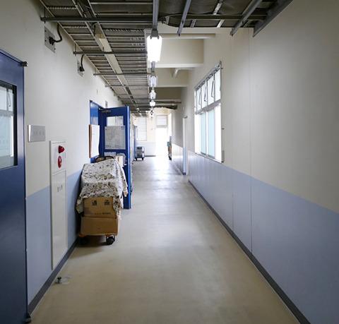 学校っぽい雰囲気の廊下。