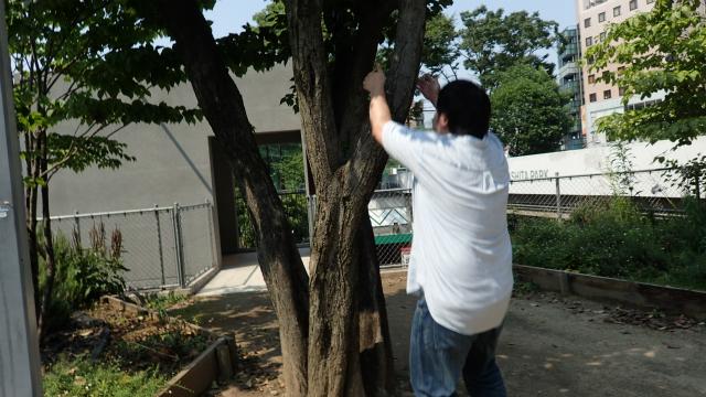 人間なので、つかみやすそうな木しか登れない。この時点でアリはすごいと思う。