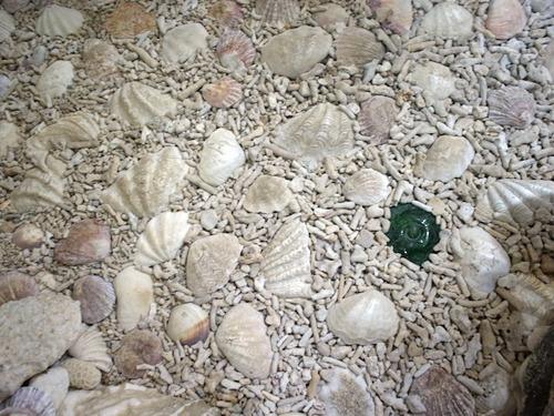床にはサンゴが敷き詰められてサンゴ山水。