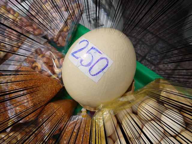 あるじゃんダチョウの卵!!