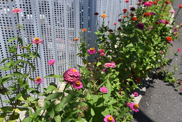 たとえば、それは沿道を彩る可憐な花々を慈しむ心とか