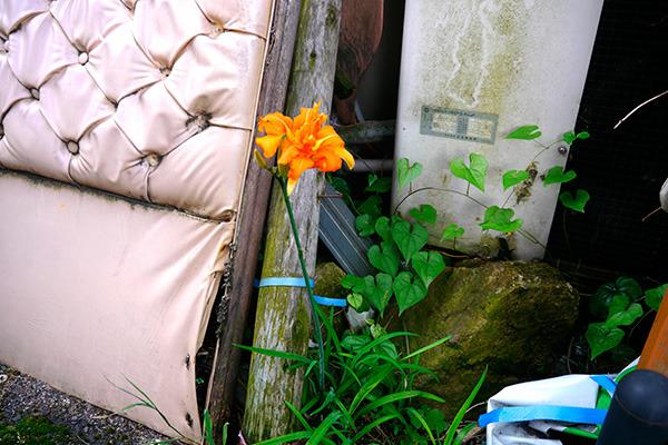 本物の花……!!