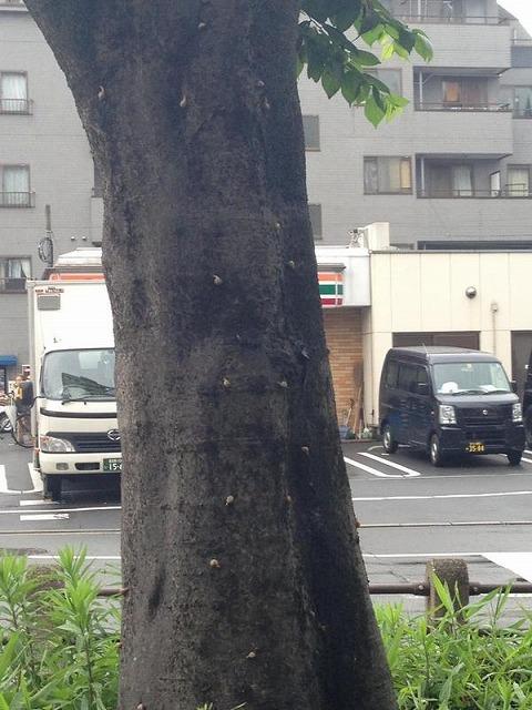 雨宿りをしようと近寄った木が、かたつむりだらけ。ギャー!!(chiha_kuro さん)