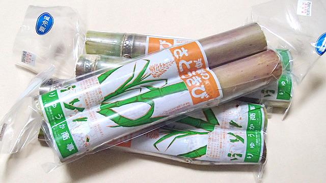 砂糖の原料。沖縄から取り寄せました。