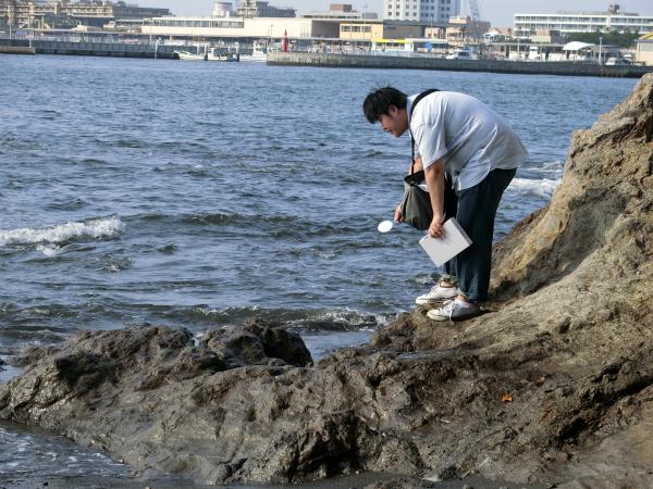 潮だまり(海水が岩場のへこんだところにたまっている場所)に生き物がいるか見ている