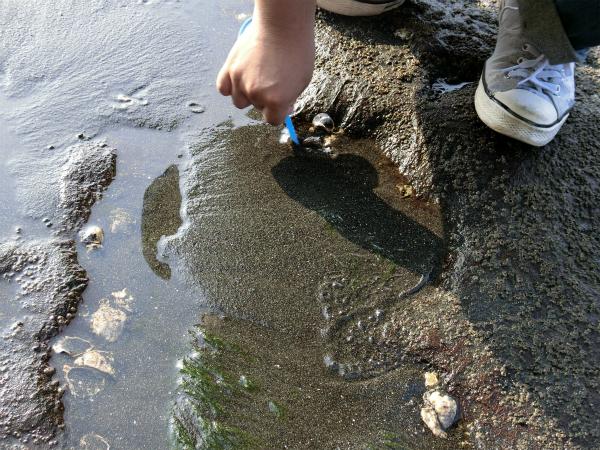 砂の中にいるかもしれないとポイの後ろで掘ってもなにもいない。おお、何もいない!
