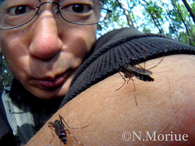変化し過ぎて球がどこに行ったかわからなくなった例。蚊とツーショット (『虫とツーショット』で使用した写真)※森上さんはプロのノウハウと覚悟でこの写真を撮影しています。わざと蚊にさされる行為は絶対にやめましょう。