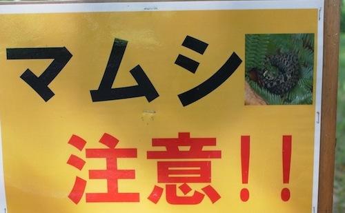 右上のヘビの写真。まごうことなきヤマカガシ。