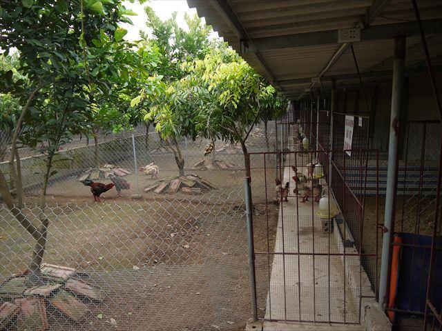 一区画の柵の中には、オスが一匹とメスが数匹の一夫多妻制。でも手前の檻は交尾ボイコット中なのか。