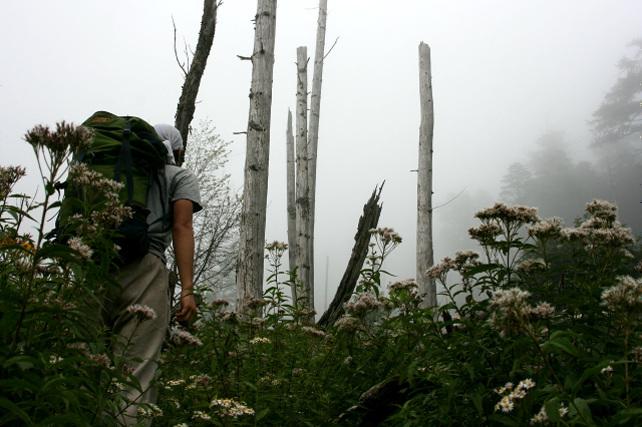 標高によって景色が変わるのが印象的だった「村山口登山道」