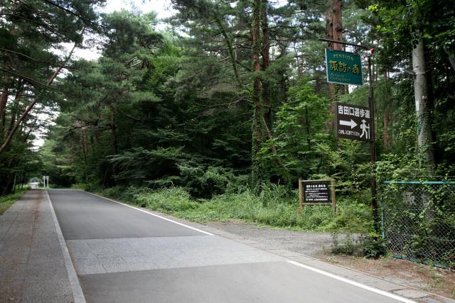 案内の看板に従い、森の中へ