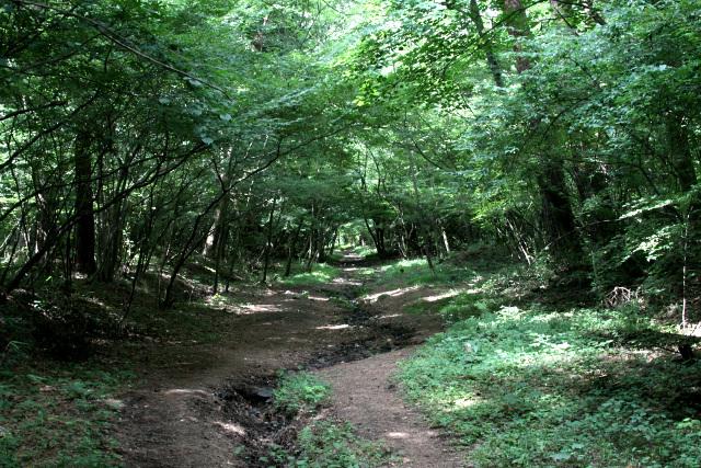 緑鮮やかな木々に囲まれて、気持ちの良い道である