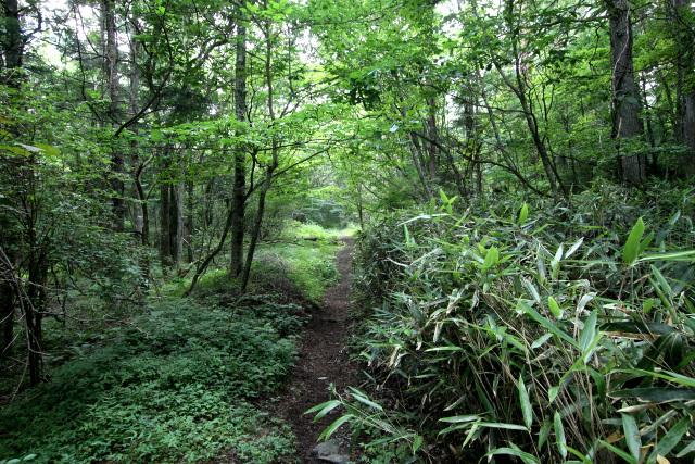 笹などの草が生い茂り、より登山道っぽくなってきた